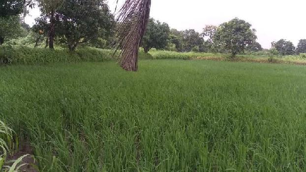 5000 Sq.ft. Agricultural/Farm Land for Sale in Alibag, Raigad