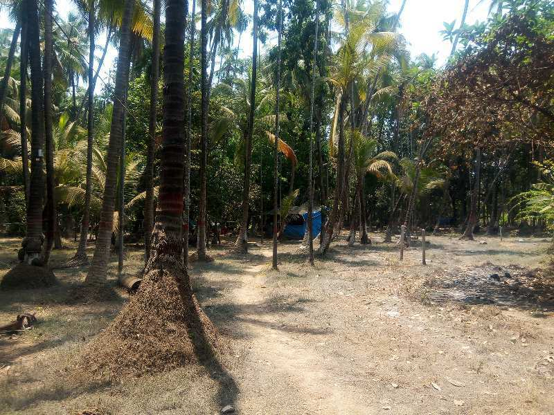 7000 Sq.ft. Agricultural/Farm Land for Sale in Alibag, Raigad