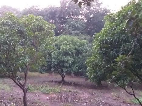 23000 Sq.ft. Agricultural/Farm Land for Sale in Alibag, Raigad