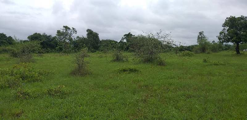 agriculture plots in alibag