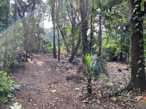 5000 sq. ft. main road touch agriculture plot