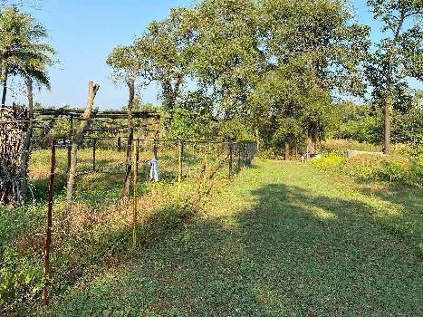 6000 Sq.ft. Agricultural/Farm Land for Sale in Alibag, Raigad