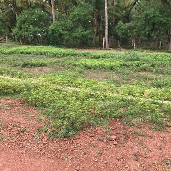 Agricultural land for sale in DHARWAD