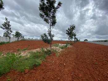 Agricultural land in BangaloreNear Mattabaralu