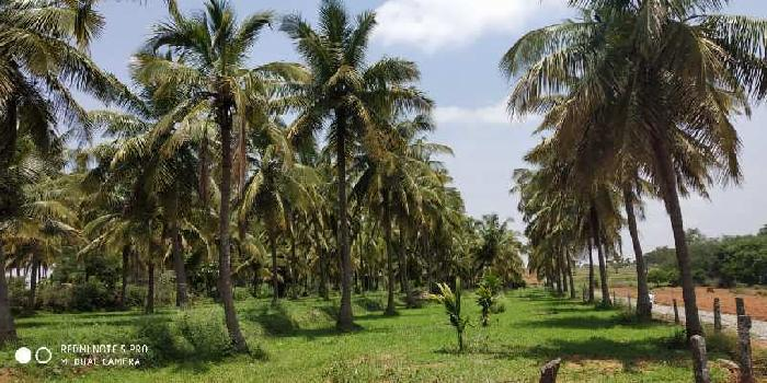 2 Acre Agricultural/Farm Land for Sale in Nelamangala, Bangalore