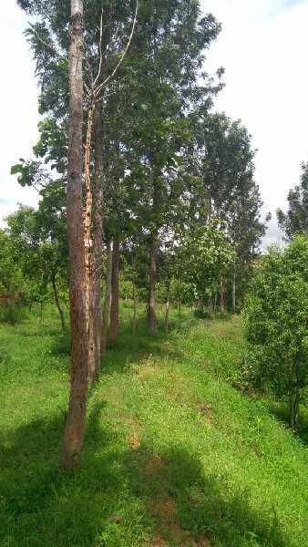 Farm land for sale in magadi, bangalore