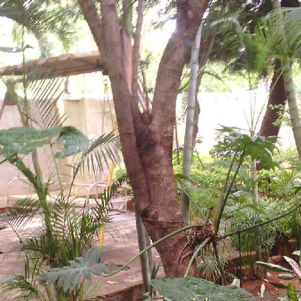Farm House For Sale in Bangalore