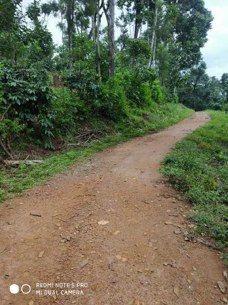 Coffee Estate For Sale In Chikmagalur