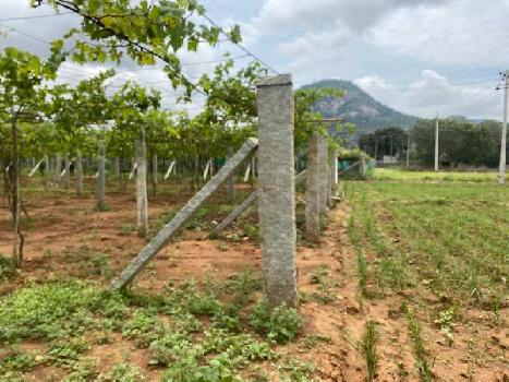 Farmland For Sale In Chikkaballapura