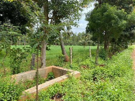 Agricultural Land For Sale in Bangalore Rural