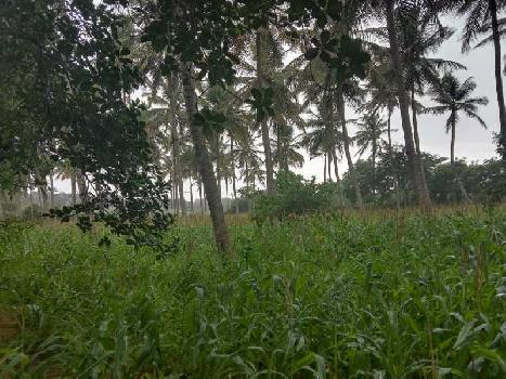 Farmland for sale in Nanjangud, Mysore