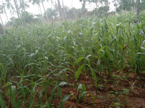 Farmland for sale in Nanjangud, Mysore