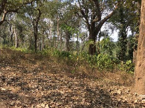 Coffee Estate For Sale in Kodagu