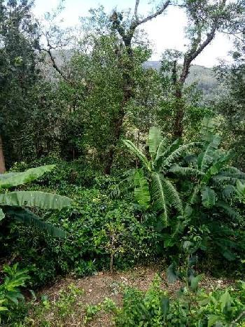 Coffee Estate Besides the river for Sale