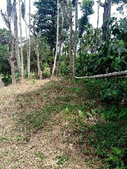 3 Acre Agricultural/Farm Land for Sale in Virajpet, Kodagu