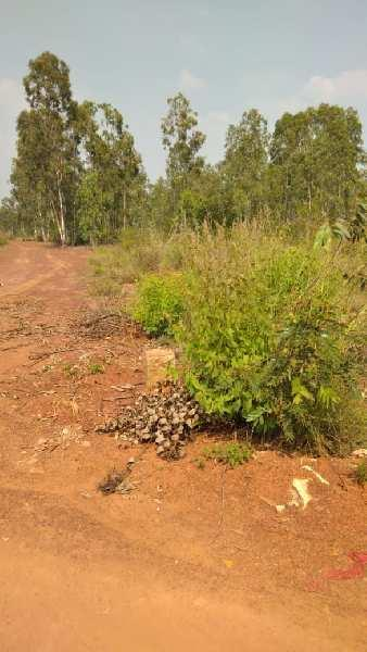 Agricultural land for sale in devanahalli, bangalore