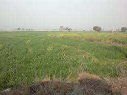 RESIDENTIAL PLOT FOR SALE IN RAMPURAM ,  DAHELI , SUJANPUR , KANPUR