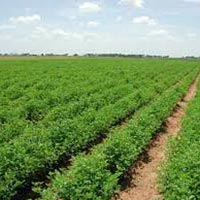 Farm Land for Sale in Aurangabad