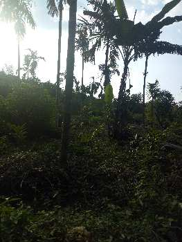 PLANTATION AND SEMI PLANTATION LAND IN SIRSI