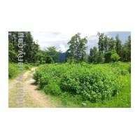Plots for sales in kullu kalhali