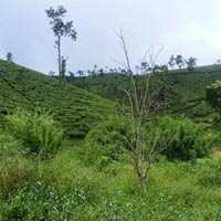 Agricultural/Farm Land for Sale in Wayanad