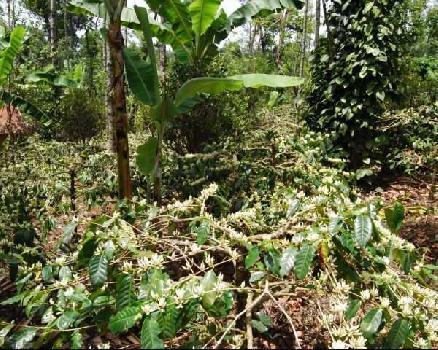 Farm Land for Sale in Wayanad