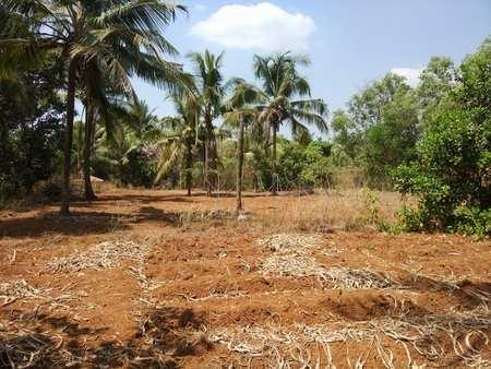 Commercial Lands /Inst. Land for Sale in Thondayad Bypass, Kozhikode