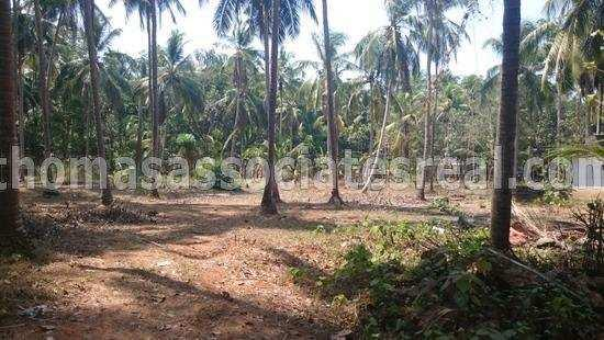 Residential Plot for Sale in Mavoor, Kozhikode