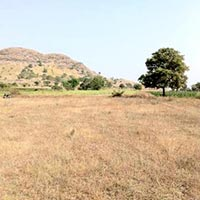 3 Acre Agriculture Land / Plot for Sale in Koregaon Dhanore Road, Pune