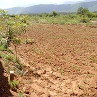 3 Acre Agriculture Land / Plot for Sale in Pune - Nagar Road, Pune
