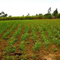 Agricultural Farm Land are Available at Pune