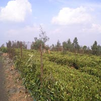 40 Cents Residential Land for Sale in Coonoor Near Betatty Village
