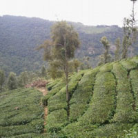 Residential plot  1acre and 5 cents for sale in coonoor