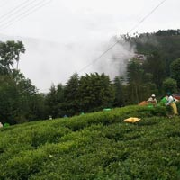 Residential Land for Sale in Coonoor