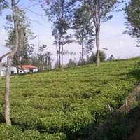 Residential Land 40 Cents for Sale in Vista Cottages, Betatty, Coonoor
