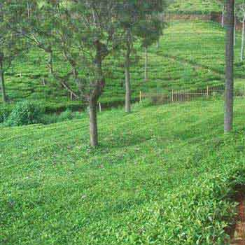 Residential land available for sale in Brooklands