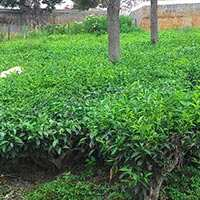 30 Cents Residential Plot for sale in Coonoor