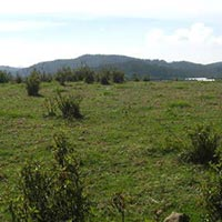 Affordable Residential Land for Sale in Coonoor
