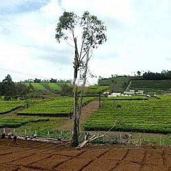 Residential Land For Sale In Ketti, Ooty