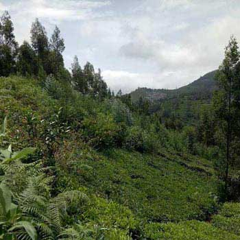 Residential Plot for Sale in Kotagiri, Nilgiris
