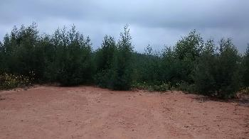 36 cents land for sale in kotagiri