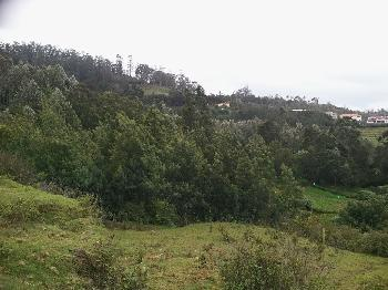 16 cents land for sale in ketti