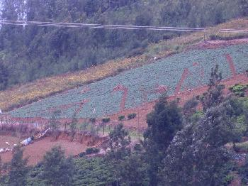 Sree Harshav Present 9.5 Acres land for sales in kotagiri