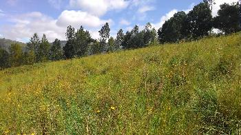 86 cents land for sale in Ooty