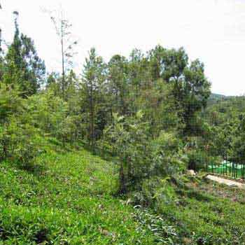 Residential Land for sale in Ooty 16 cents