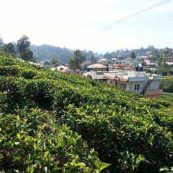 16 cents land for sale in coonoor