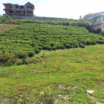 37.6 Cents land for sale in Coonoor