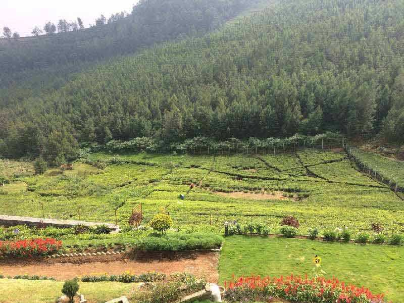 Residential Land with 1 Acres for sale in Kotagiri