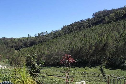 52 Cents land for sale in Kotagiri