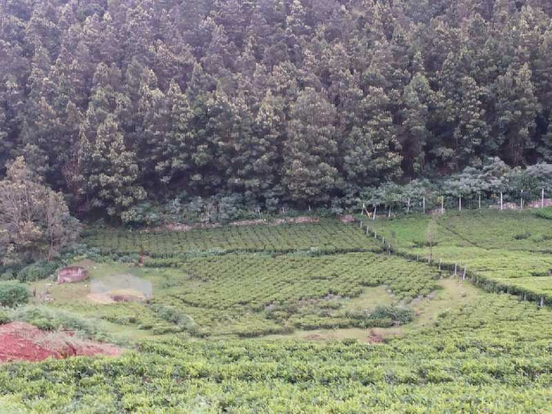 48 Cents land for sale in Kotagiri